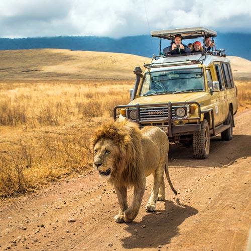 Сафари-туры после восхождения на Килиманджаро