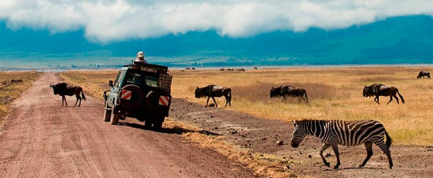 Организация сафари туров в Танзании