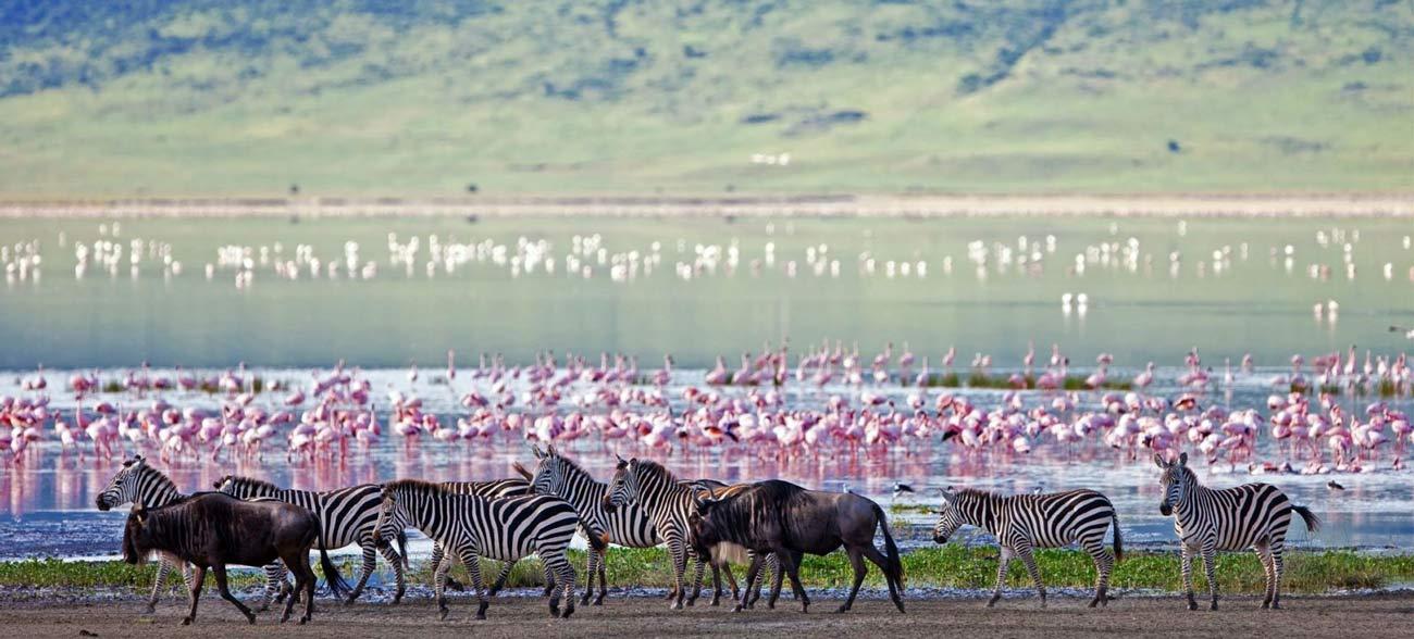Этот парк представляет собой кратер вулкана, где живут разнообразные животные