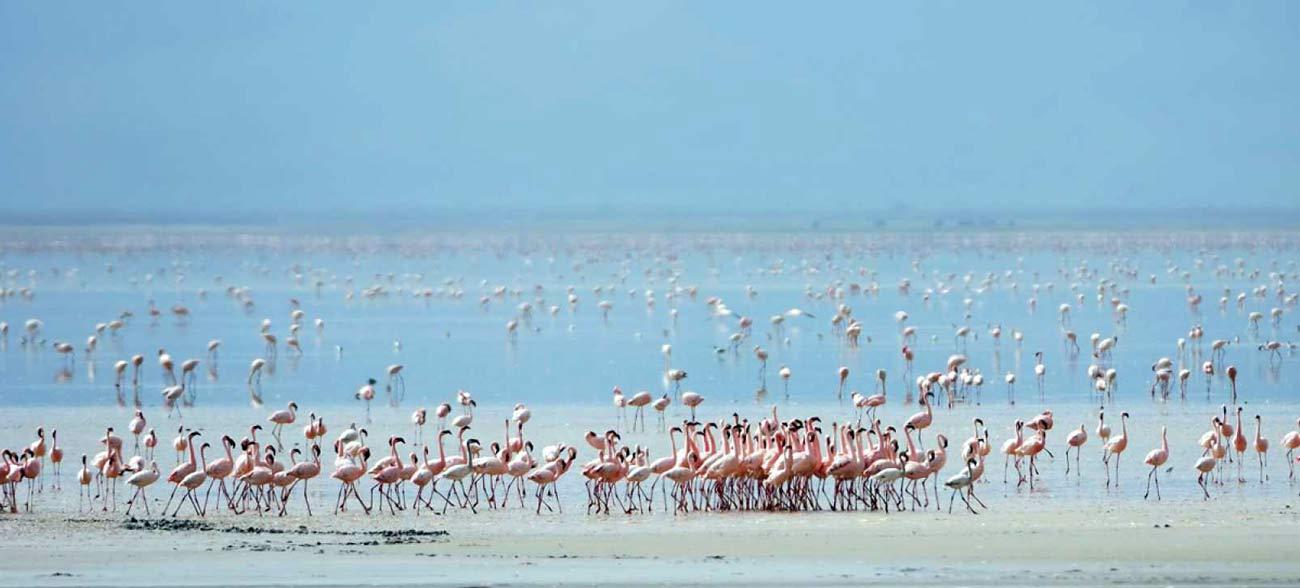 На озере Маньяра можно увидеть множество фламинго и других животных