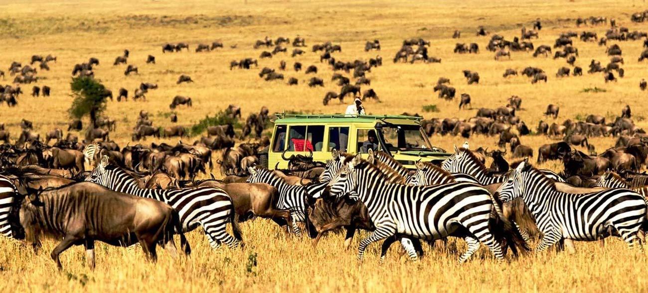 Самый большой национальный парк в Танзании, огромный выбор различных животных для фотосъемки