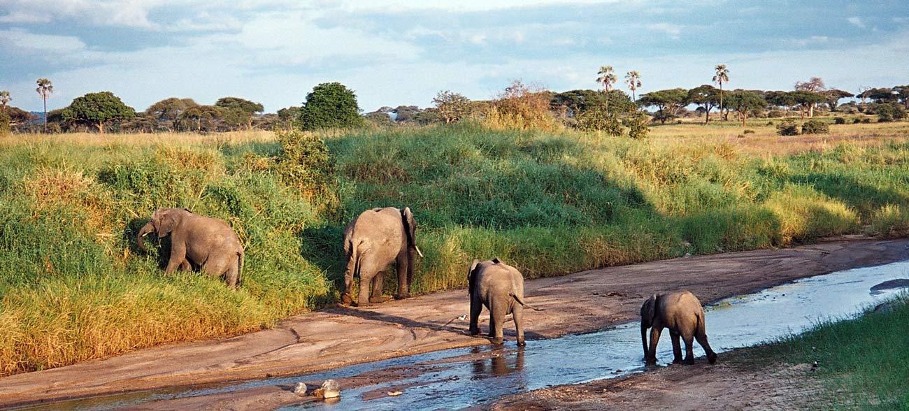 Небольшой национальный парк, но очень насыщенный в плане разновидностей представленных животных