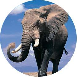 На сафари в Танзании в национальном парке Серенгети можно встретить слонов
